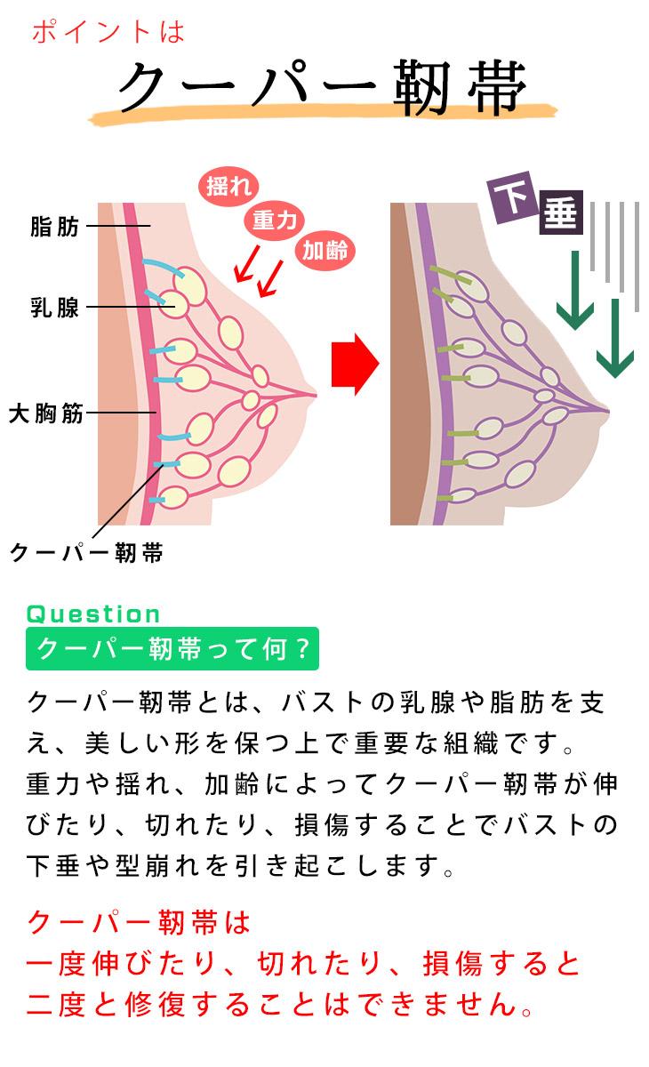 加齢によって損傷するクーパー靭帯(ナイトブラ特集)